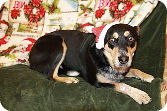 Blue Heeler Mix Dog for adoption in Hibbing, Minnesota - BLAZE