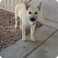 Adopt A Pet :: JoJo - Only $95 adoption! - Litchfield Park, AZ