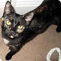 Adopt A Pet :: White Paw - Jacksonville, FL