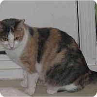 Adopt A Pet :: Julia - Catasauqua, PA