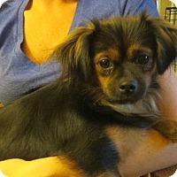 Adopt A Pet :: Mary - Salem, NH