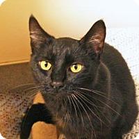 Adopt A Pet :: Magnola - Bellevue, WA