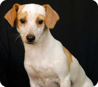 Terrier (Unknown Type, Medium) Mix Dog for adoption in Newland, North Carolina - Serendipity