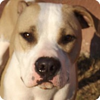 Adopt A Pet :: Duke - Oxford, MS