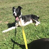 Adopt A Pet :: Annie - Von Ormy, TX