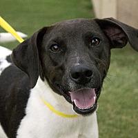 Adopt A Pet :: Doc - Stillwater, OK