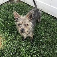 Adopt A Pet :: Rocket - Logan, UT