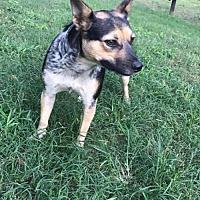 Adopt A Pet :: Burt - Longview, TX