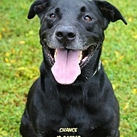 Adopt A Pet :: Chance - Camden, DE
