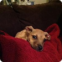 Adopt A Pet :: Maya - Justin, TX
