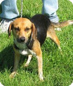 Beagle Mix Dog for adoption in Mineral, Virginia - Megan
