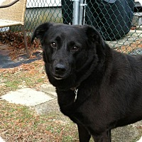 Adopt A Pet :: Maive - Courtesy Posting - New Canaan, CT