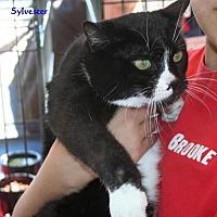 Adopt A Pet :: Sylvester - Salamanca, NY