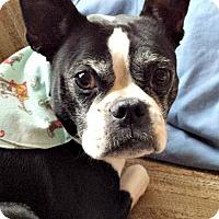 Adopt A Pet :: Jackson - Greensboro, NC