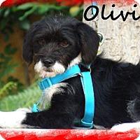 Adopt A Pet :: OLIVIA - Riverside, CA