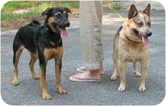 Rottweiler/Welsh Corgi Mix Dog for adoption in Peachtree City, Georgia - Pepper and Randy