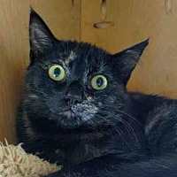 Adopt A Pet :: ROSEBUD - San Clemente, CA