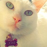 Adopt A Pet :: Joni - San Bernardino, CA