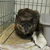 Adopt A Pet :: Stevie - Chelsea - Kalamazoo, MI