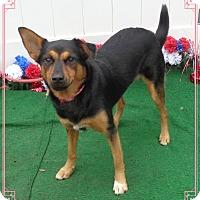 Adopt A Pet :: NOVA - Marietta, GA