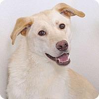 Adopt A Pet :: Lyle - Sudbury, MA