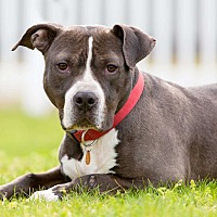 Adopt A Pet :: Cam **$20 adoption fee** - Staten Island, NY