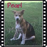Adopt A Pet :: Pearl - Stuart, VA