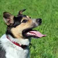Adopt A Pet :: Chance - Elkhorn, WI