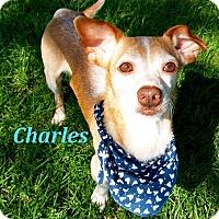 Adopt A Pet :: Charles - El Cajon, CA