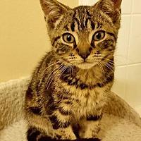 Adopt A Pet :: Dex - East Brunswick, NJ