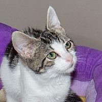 Adopt A Pet :: Goldie - Elmwood Park, NJ