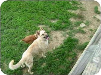 German Shepherd Dog Dog for adoption in Cincinnati, Ohio - Magnum