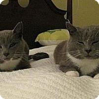 Adopt A Pet :: Mickie & Moochie - Monroe, NC