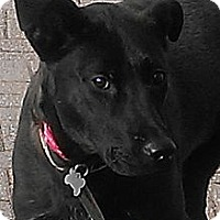 Adopt A Pet :: Tatum - PENDING, in Maine - kennebunkport, ME