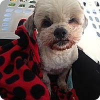 Adopt A Pet :: Kyoto - Oceanside, CA