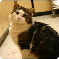 Adopt A Pet :: Handsome - Jenkintown, PA