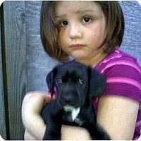 Adopt A Pet :: Jay Jay - Kingwood, TX