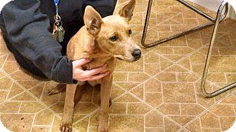 Shepherd (Unknown Type)/Labrador Retriever Mix Puppy for adoption in Stafford, Virginia - Dixie