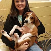 Adopt A Pet :: Toby - Elmwood Park, NJ