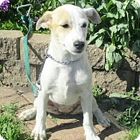 Adopt A Pet :: Yeng - West Chicago, IL