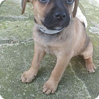 Adopt A Pet :: Saturn - Austin, TX
