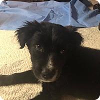 Adopt A Pet :: Bond - Denver, CO