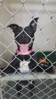 Mixed Breed (Medium) Mix Dog for adoption in Manitowoc, Wisconsin - Betty