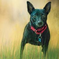 Chihuahua Mix Dog for adoption in Dalton, Georgia - Lady