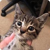 Adopt A Pet :: Raven - Lorain, OH