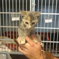 Adopt A Pet :: Nadine - Russellville, KY