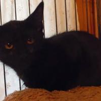 Adopt A Pet :: Loni - Yakima, WA