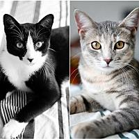 Adopt A Pet :: Smidgen & Taffy - Owings Mills, MD