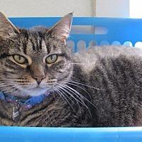Adopt A Pet :: Colby - Cumberland, ME