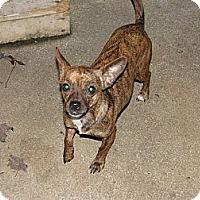 Adopt A Pet :: Little Girl - maryville, TN